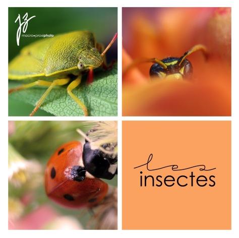 Insectes (c) Macro-ProxiPhotos ByJZ